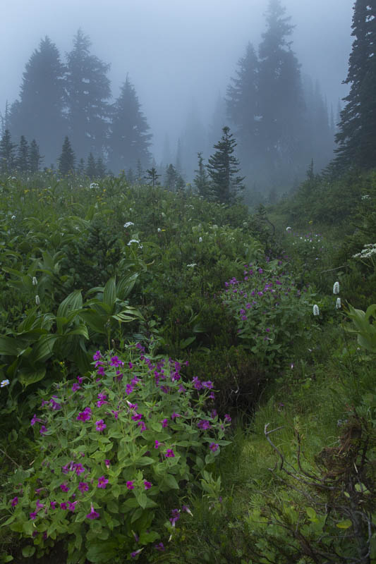 "фото ""Misty"" метки: пейзаж, природа, Mount Rainier, Wildflowers, fog, mimulus, mist"