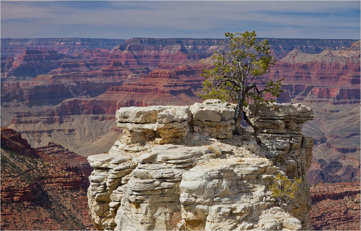 """фото """"Мы с тобой два дерева у одной реки.."""" метки: пейзаж,"""