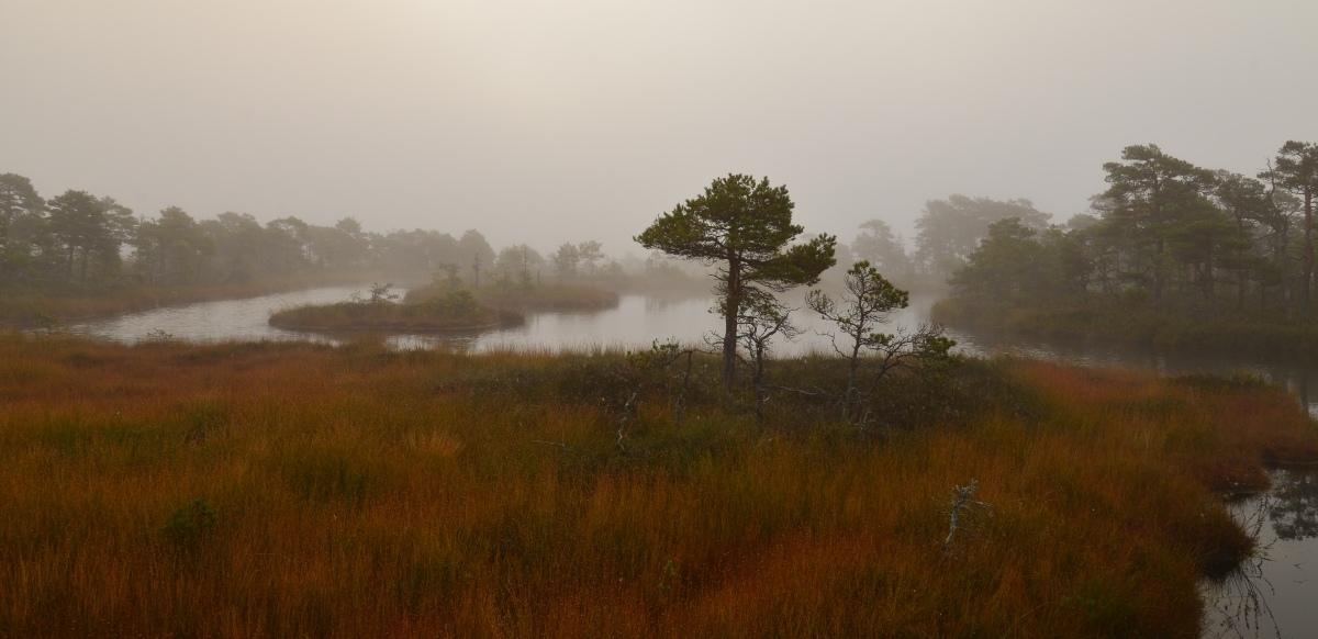 """фото """"***"""" метки: пейзаж, природа, bog, вода"""