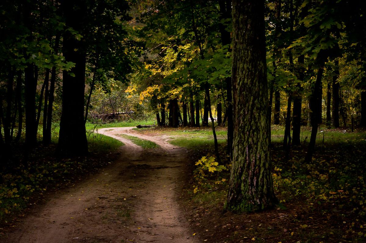"фото ""Что там, за поворотом?..."" метки: природа, лес, осень"
