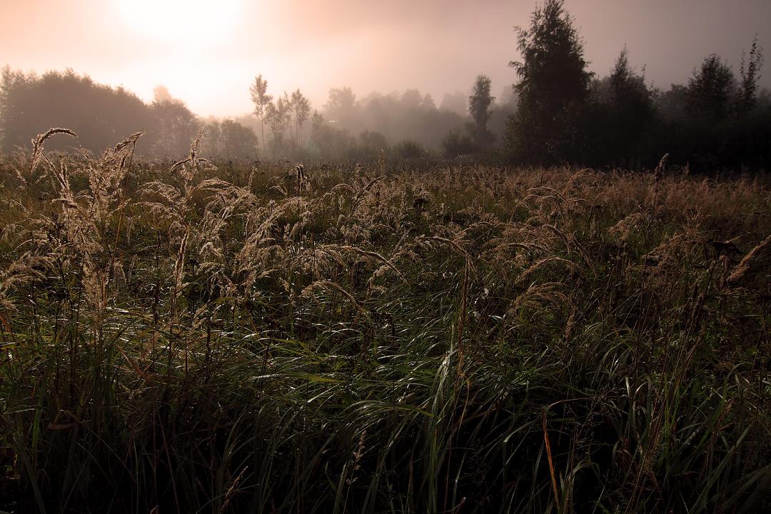 """фото """"Утро в деревне"""" метки: пейзаж,"""