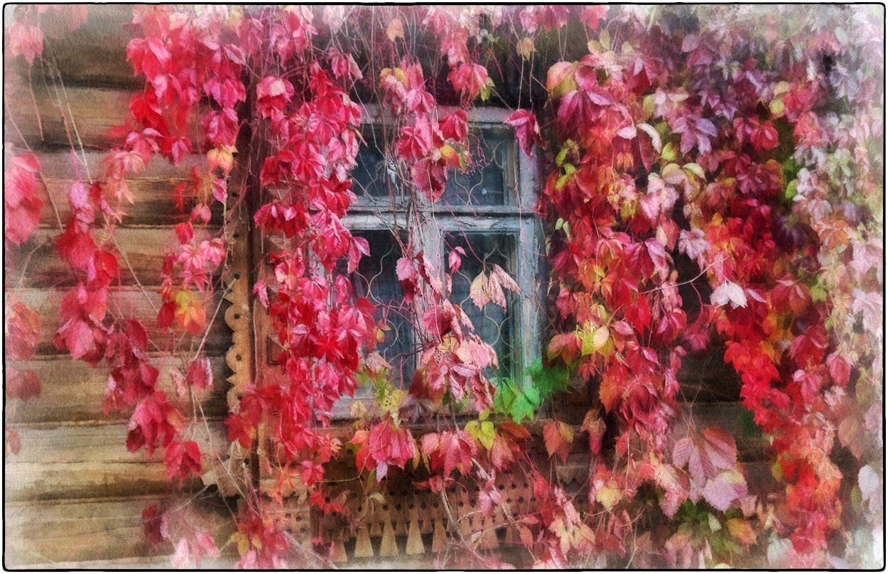 "фото ""осень у окна"" метки: природа, digital art,"