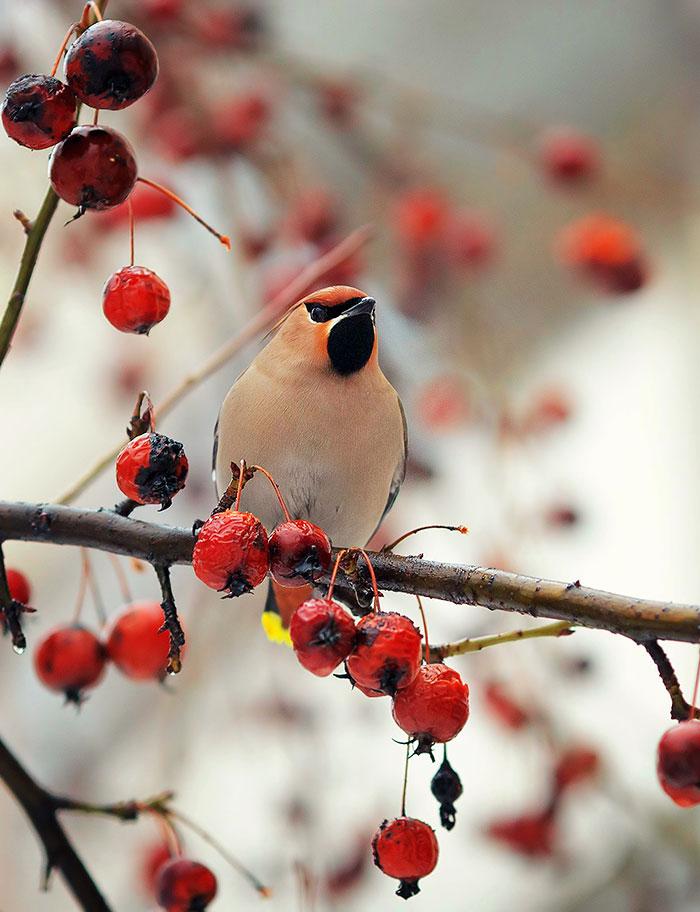 "фото ""в яблочном антураже"" метки: природа,"
