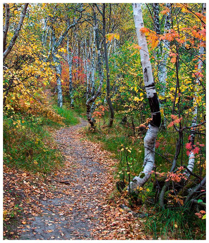 """фото """"Тропинкой в осень"""" метки: пейзаж, природа, лес, осень, отдых, путешествие, туризм"""