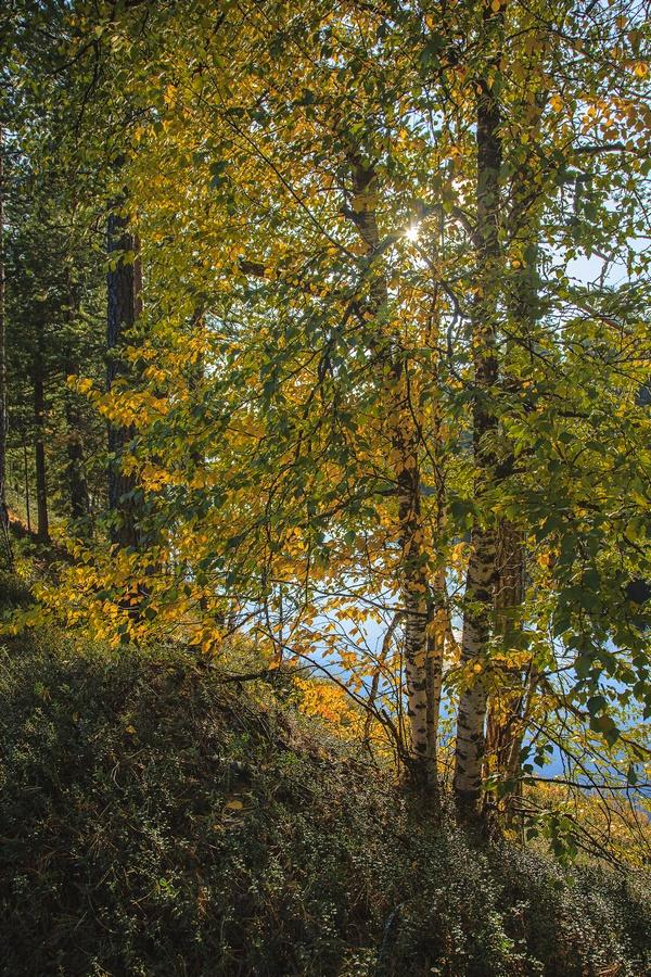 """фото """"Золотая осень"""" метки: пейзаж, природа, осень, солнечный день"""