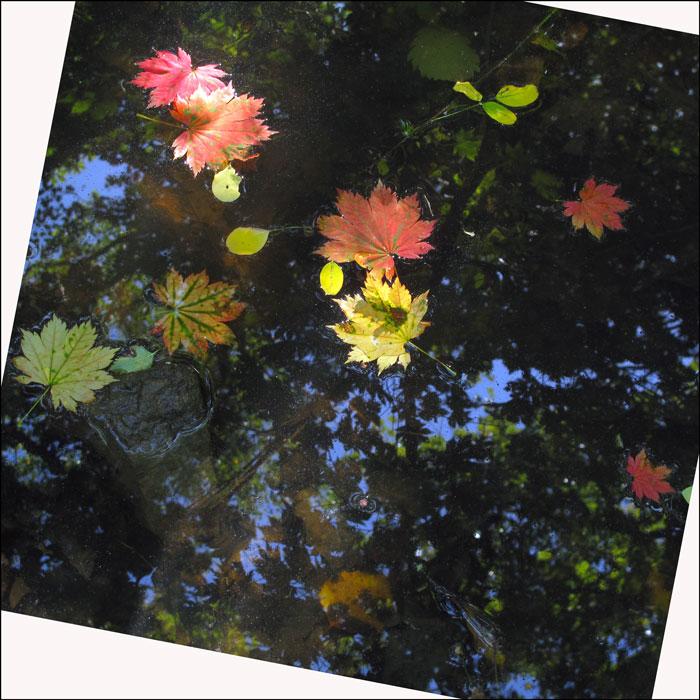 "фото ""Ах осень"" метки: натюрморт, абстракция, краски, осень, отражения"