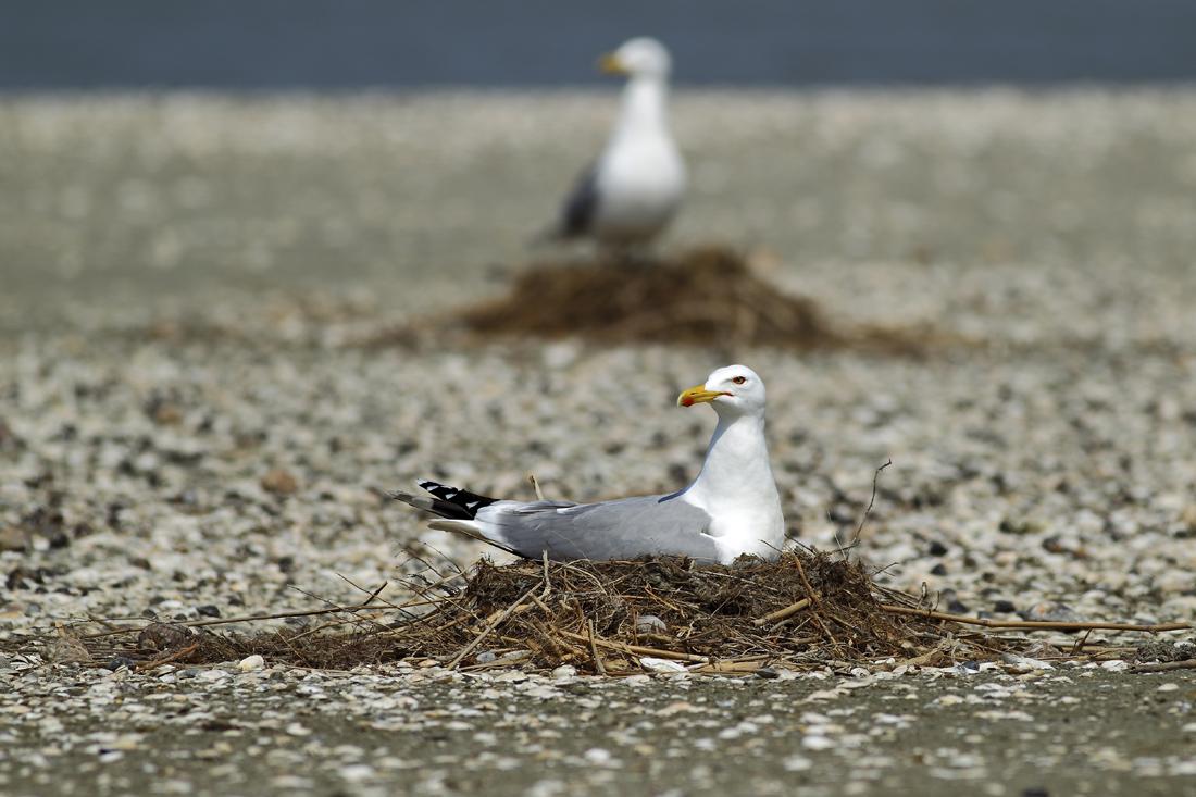 """фото """"Птичий роддом"""" метки: природа, дикие животные"""