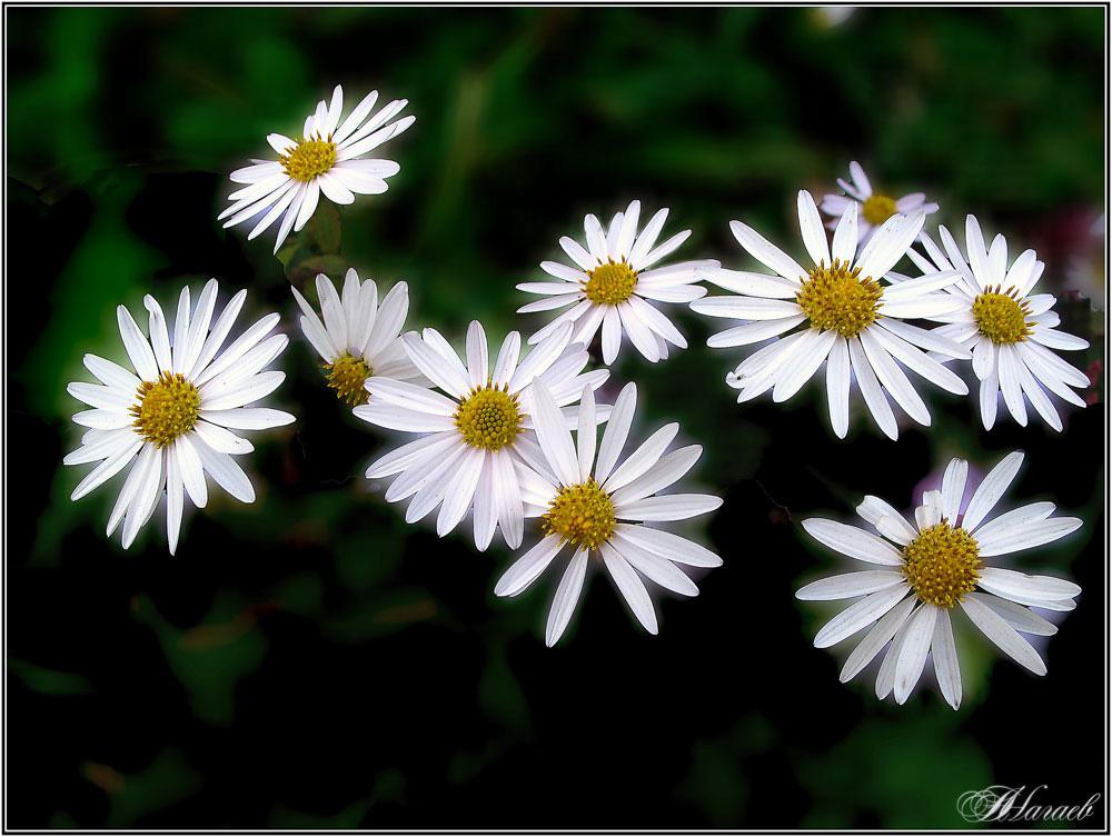 """фото """"Сентябрьские, полевые"""" метки: природа, макро и крупный план, осень, цветы."""