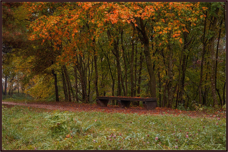 """фото """"Художник осень ..."""" метки: пейзаж, дождь, осень, парк"""