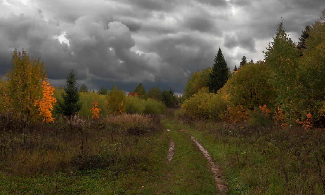 """фото """"Краски без солнца"""" метки: пейзаж, зелень, колея, краски, лес, осень, сентябрь, тучи"""