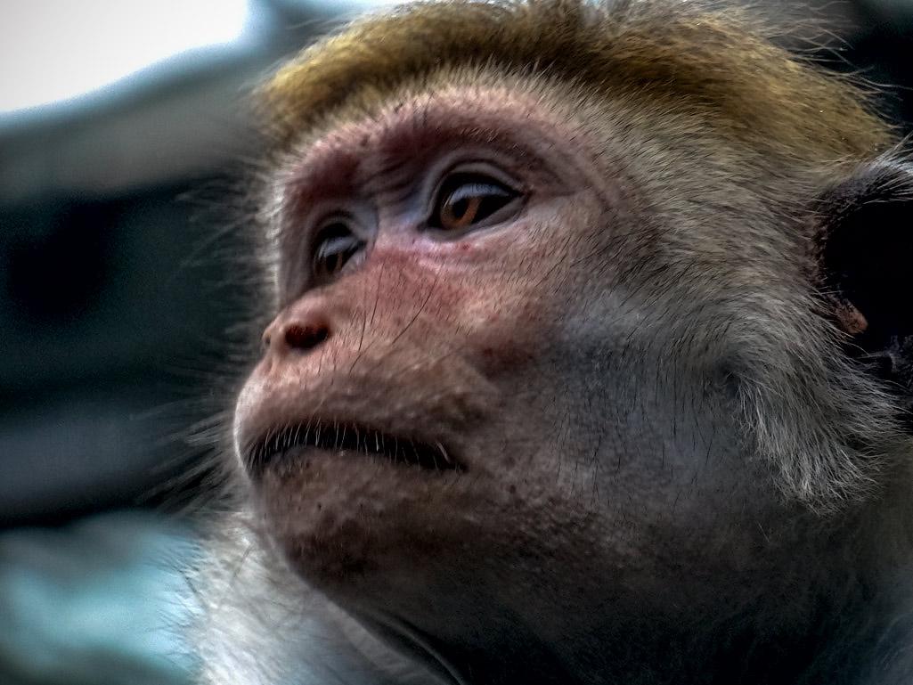"""фото """"Прекрасное Далёко, не будь камнежестоко!"""" метки: разное, портрет, foto liubos, зоопарк, обезьяна"""