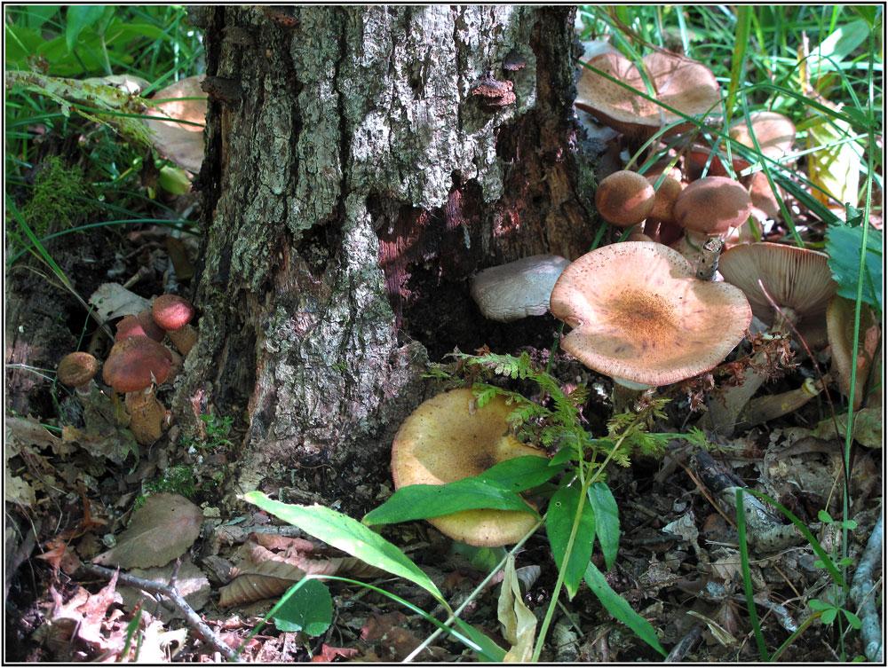 """фото """"Всем по гибы."""" метки: природа, макро и крупный план, грибы, осень"""