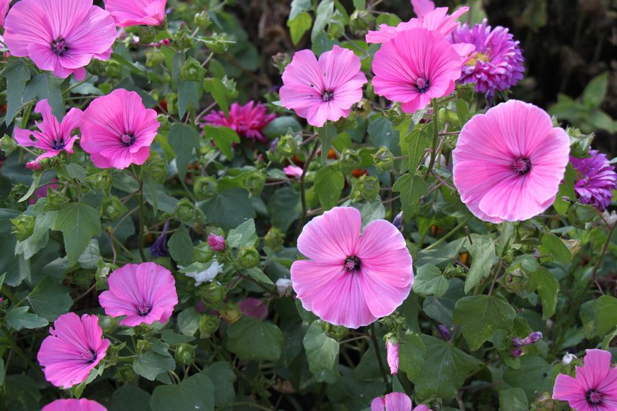 """фото """"Цветы"""" метки: природа,"""