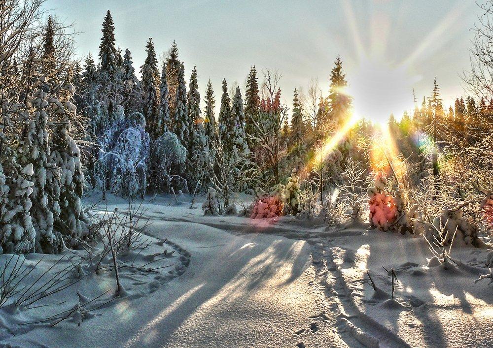 "фото ""мороз и солнце"" метки: пейзаж, природа, зима, лес"