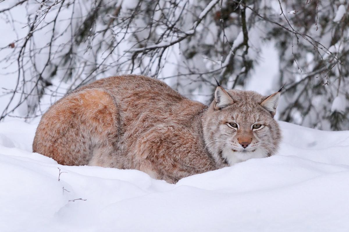 "фото ""Котя"" метки: природа, путешествия,"