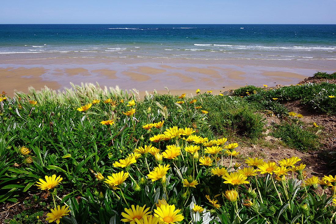 """фото """"Еще не лето"""" метки: пейзаж, природа, beach, blue, ocean, sea, небо, цветы"""