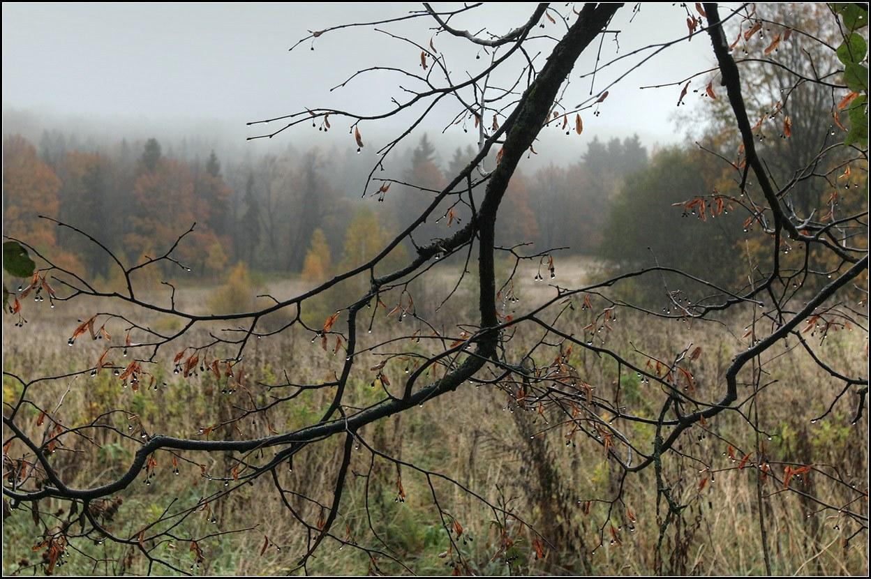 """фото """"дождливая осень"""" метки: пейзаж, природа,"""