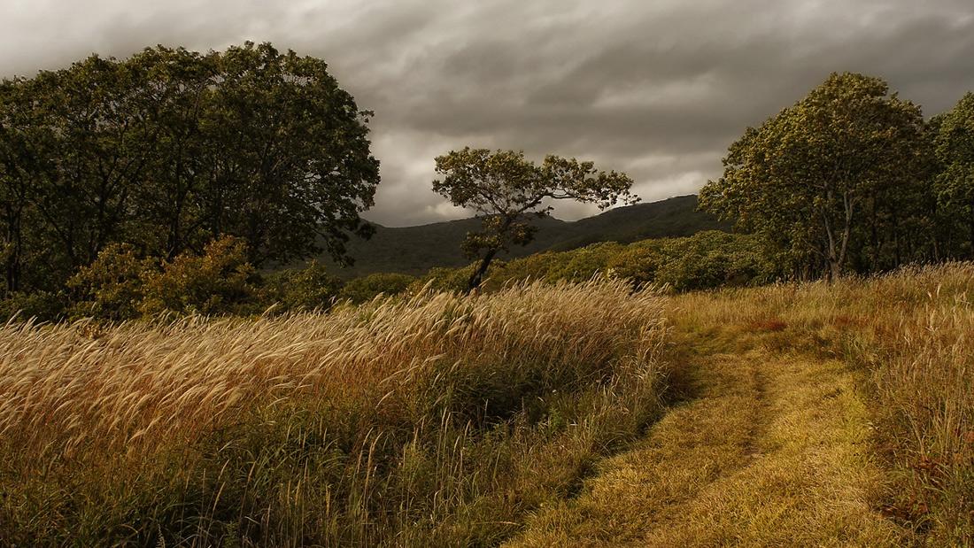 """фото """"На сопках Манчжурии"""" метки: пейзаж, Дальний Восток, Приморье, осень"""