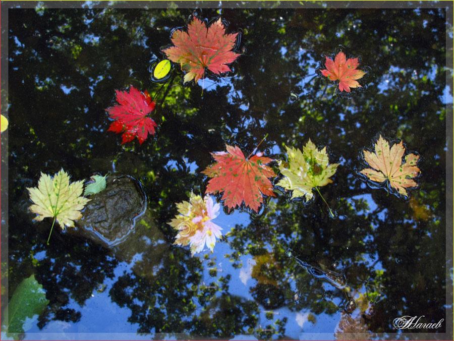 """фото """"Осенний каледоскоп"""" метки: природа, натюрморт, краски, осень, отражения"""