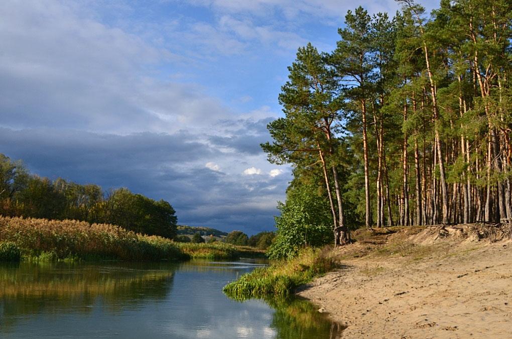сосны на берегу озера картинки второй