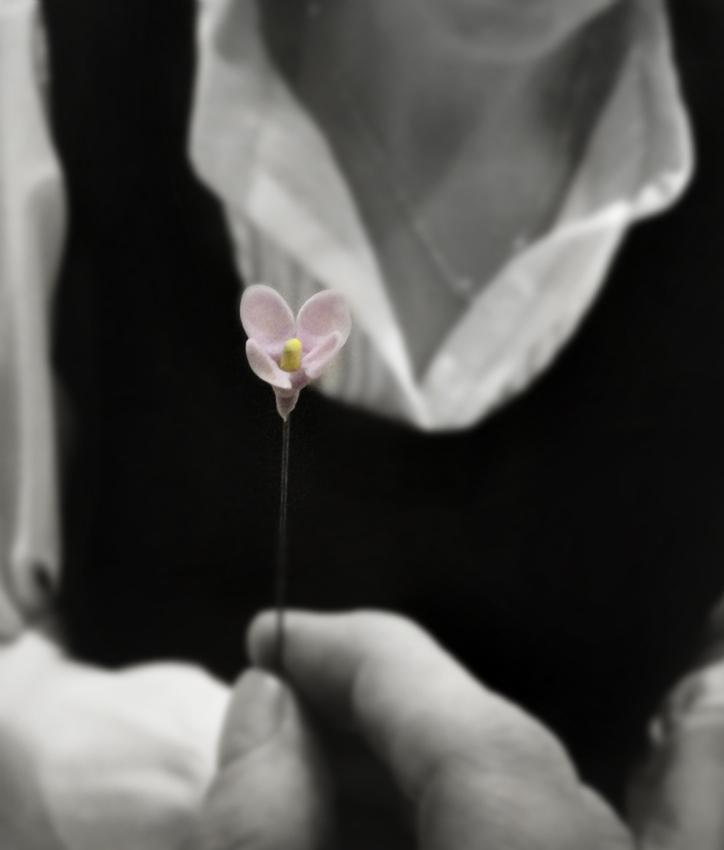 """фото """"Верь, надейся и люби"""" метки: черно-белые, цветок"""
