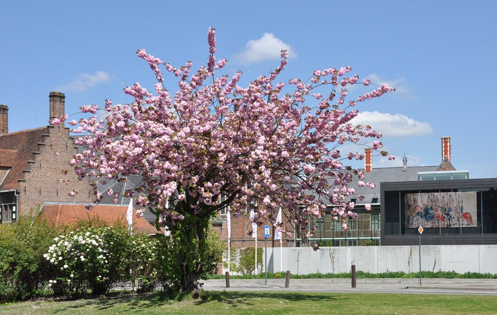"""фото """"весна в Генте"""" метки: пейзаж, город, Гент, весна"""