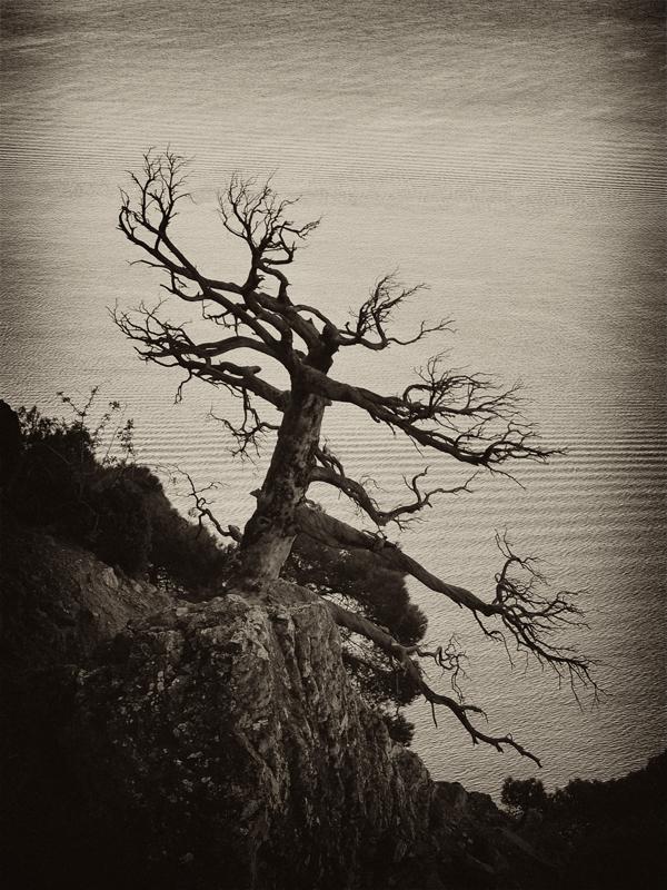 """фото """"На краю"""" метки: черно-белые, природа,"""