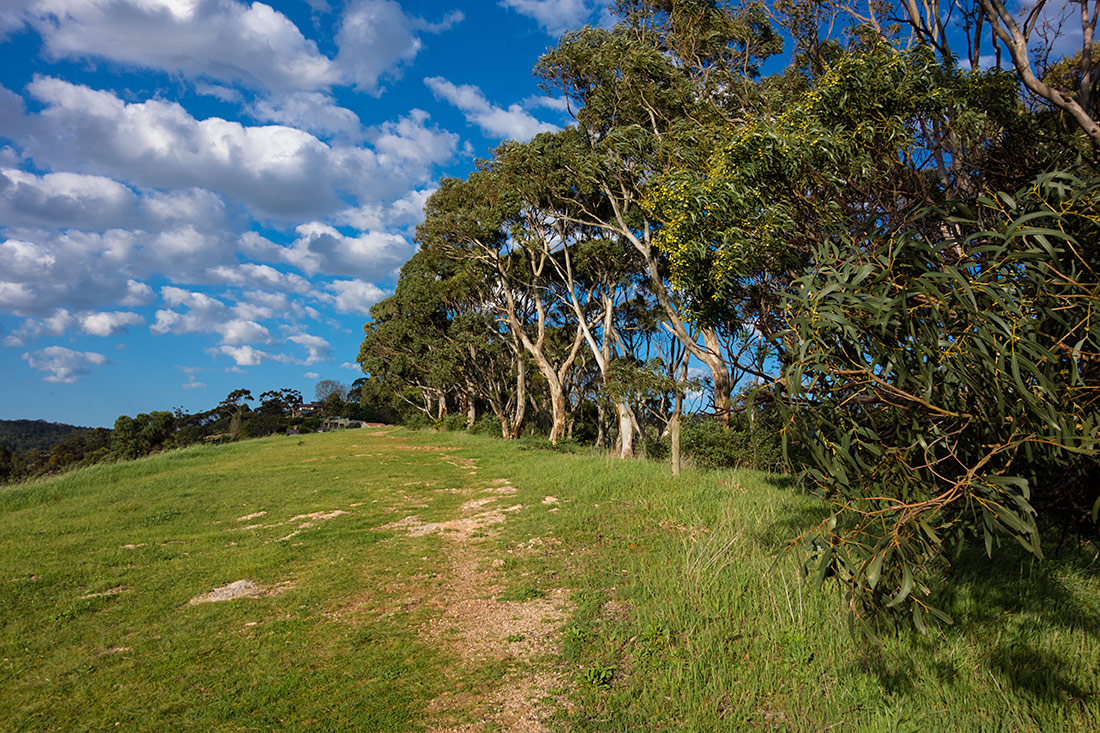 "фото ""По тропинке в гору"" метки: пейзаж, australian flora, forest, grass, green, hills, nature, trees, view"