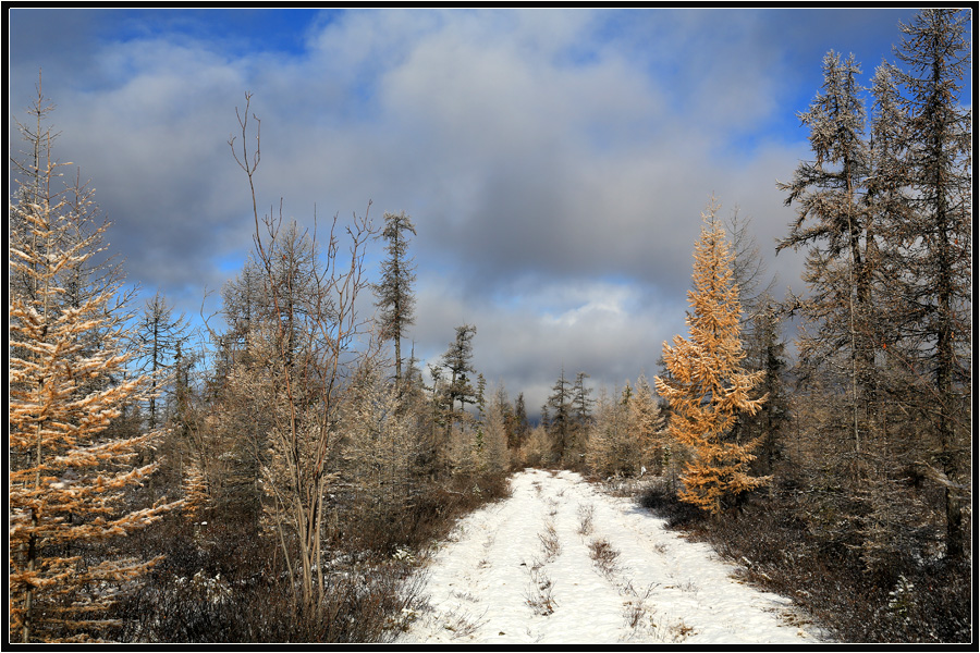 "фото ""Вот и зима"" метки: пейзаж, дорога, зима, тайга"