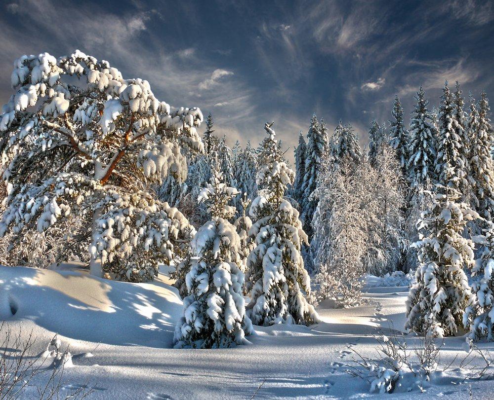Фотография заколдованный лес - фотограф евгений кошелев