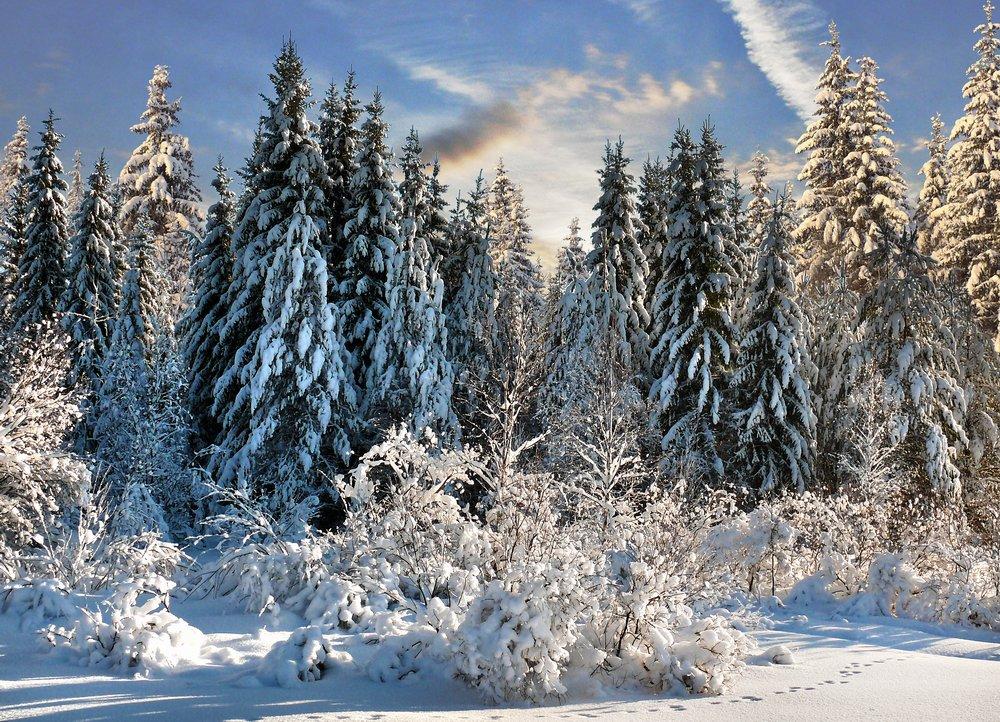 Зимние птички фото григорьев свежие