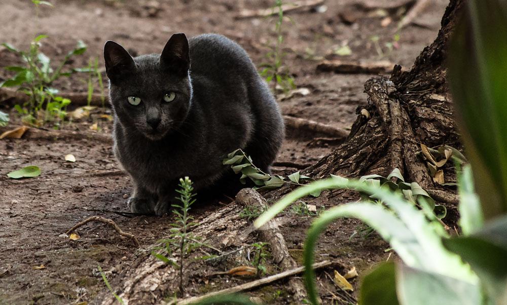 """фото """"Street Cat"""" метки: портрет, стрит-фото, природа, Lisbon, animals, домашние животные"""
