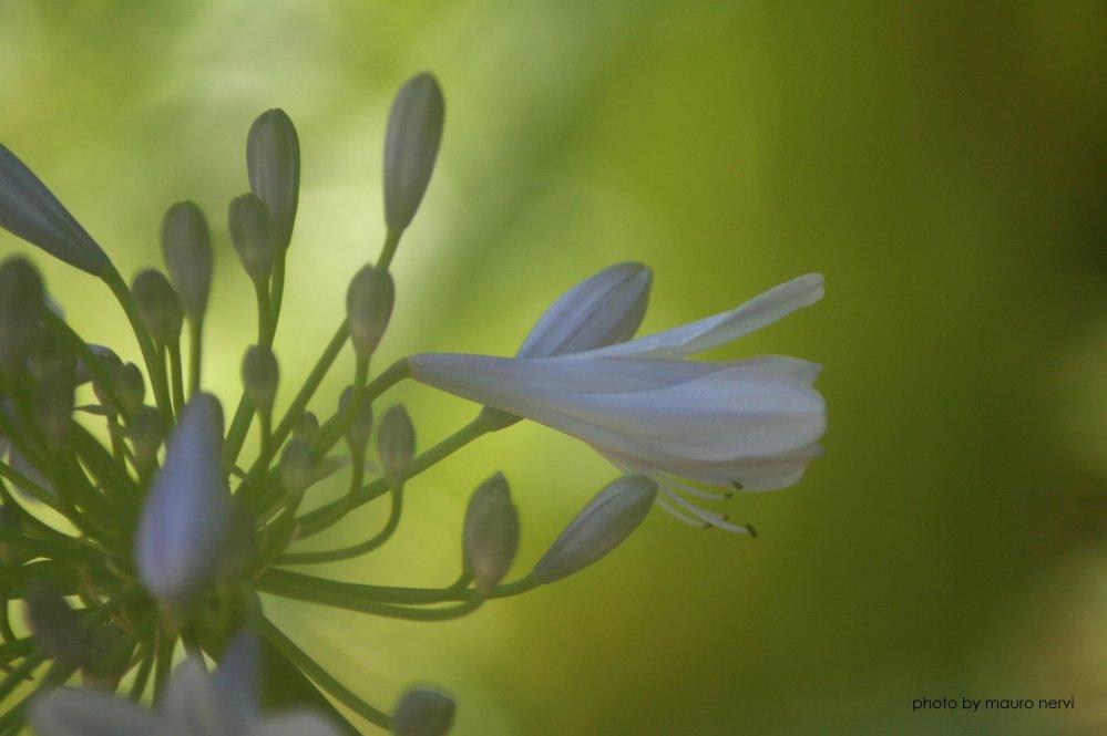 """фото """"in the garden"""" метки: природа,"""