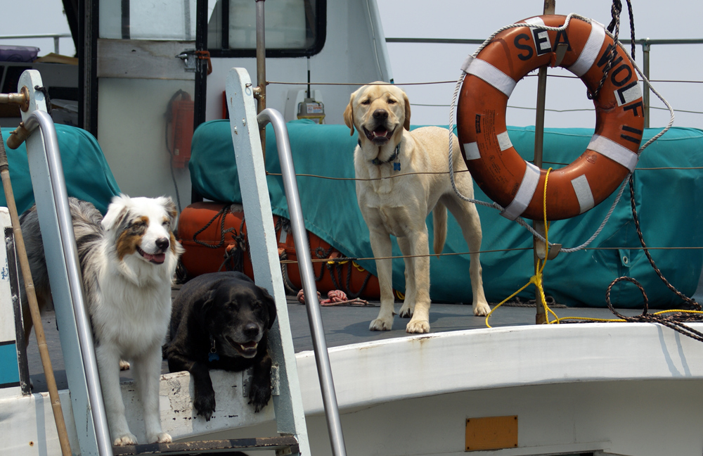 "фото ""Three Sea Wolves"" метки: юмор, America, домашние животные"