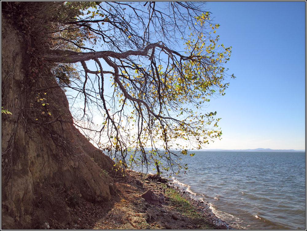 """фото """"На берегу залива"""" метки: пейзаж, краски, лес, море, осень"""