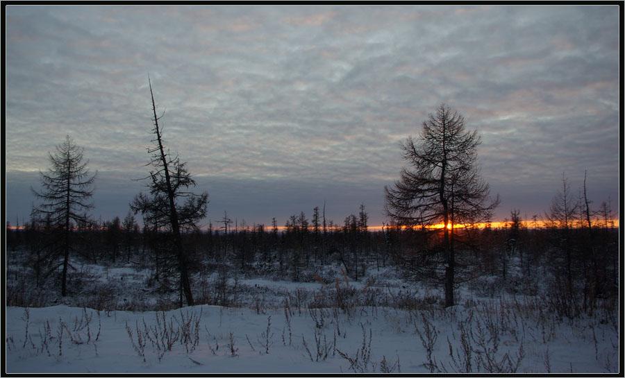 """фото """"Зимний вечер"""" метки: пейзаж, вечер, зима, тайга"""