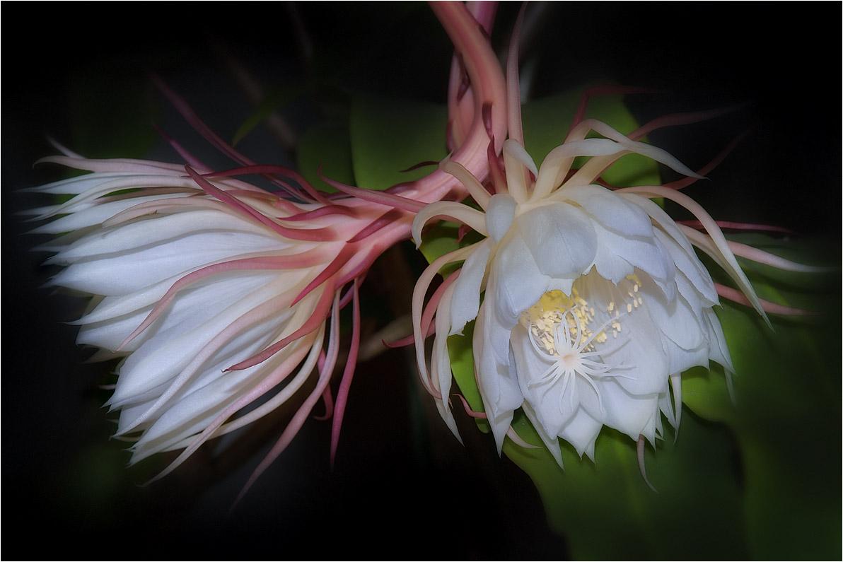 """фото """"Чудесное цветение"""" метки: природа,"""