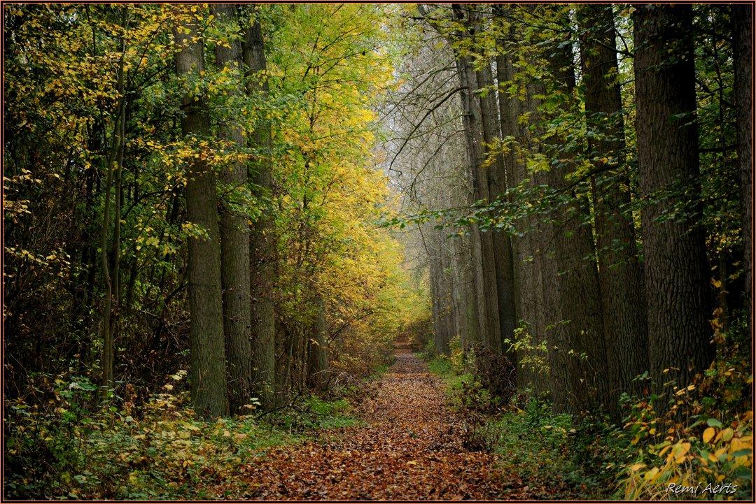 """photo """"***"""" tags: landscape, nature, autumn, forest"""