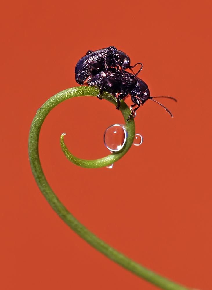 """фото """"И все бриллианты к твоим ногам..."""" метки: макро и крупный план, природа, макро, насекомое"""