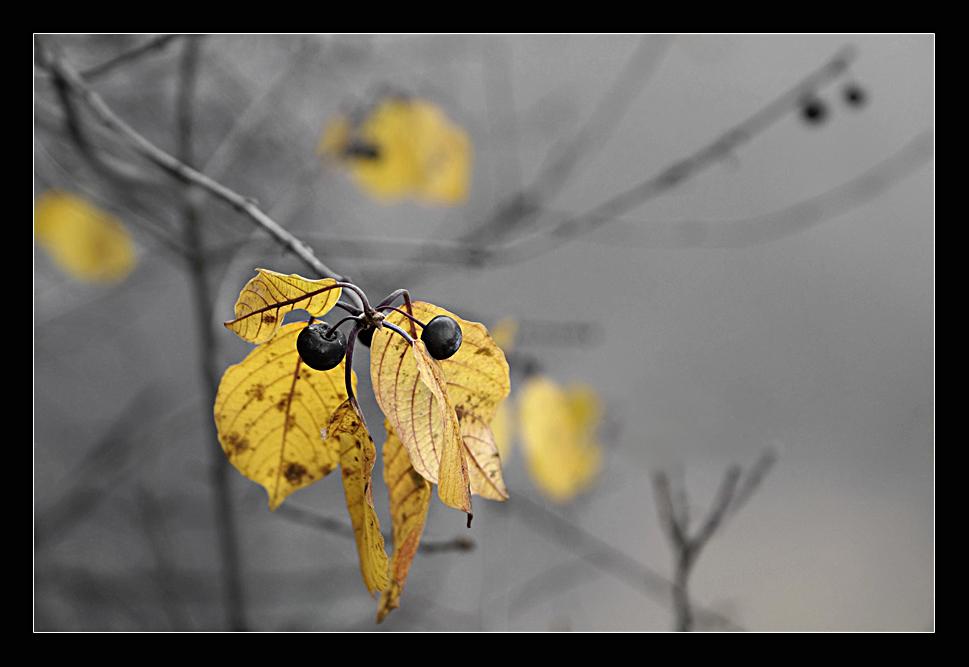 """фото """"Осенью."""" метки: ,"""