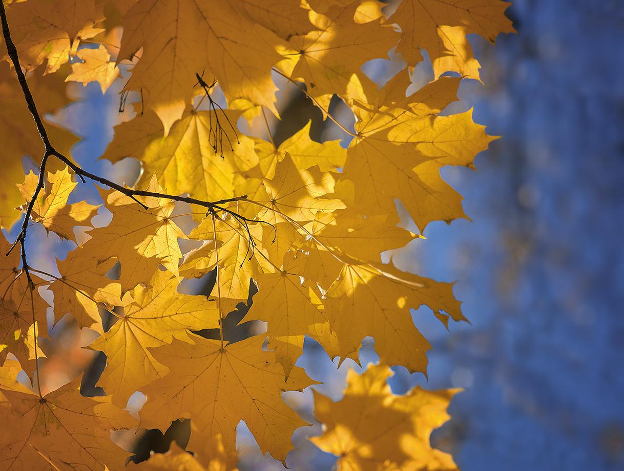 """фото """"О  любви к осени..."""" метки: пейзаж, макро и крупный план,"""