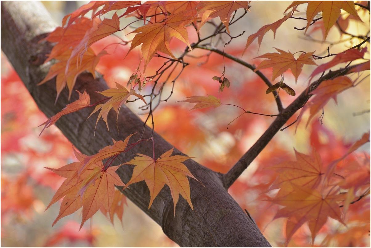 "фото ""***"" метки: природа, осень"
