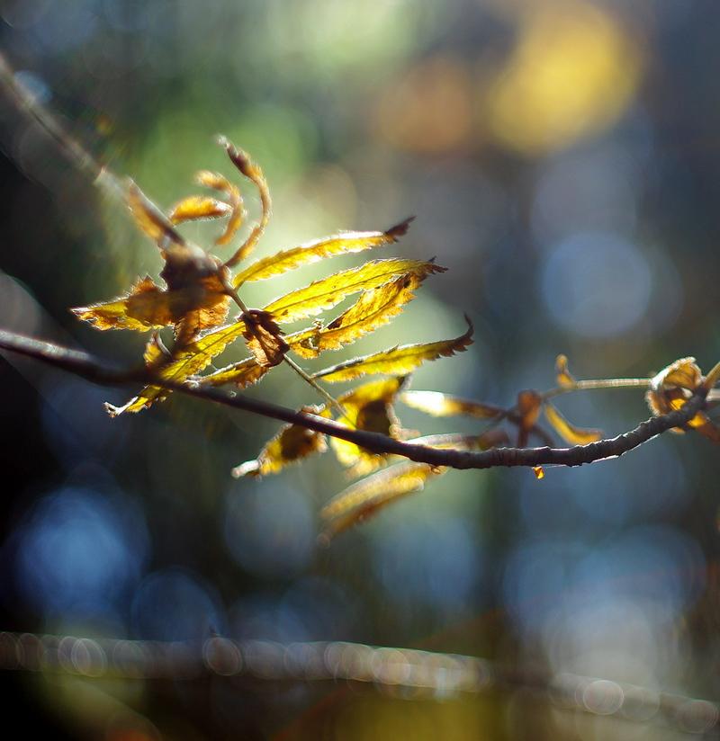 "фото ""Магия октября"" метки: природа,"
