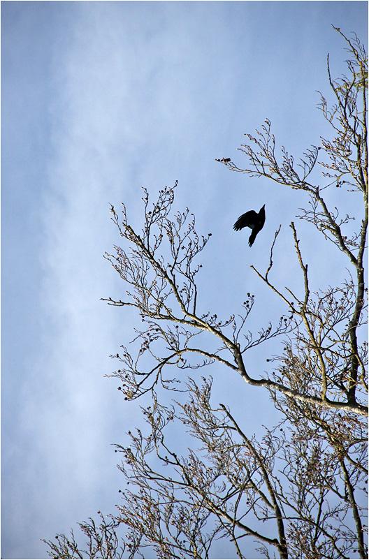 "фото ""Ракета"" метки: природа, птицы"