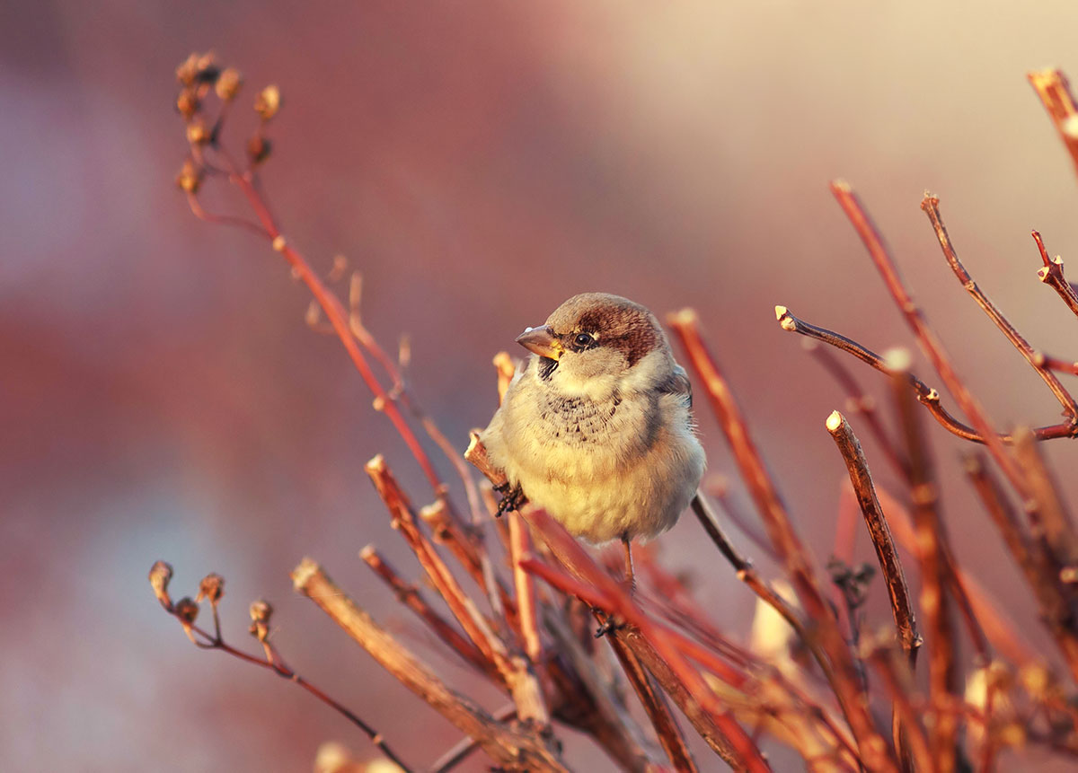 "фото ""в лучах восходящего солнца"" метки: природа,"