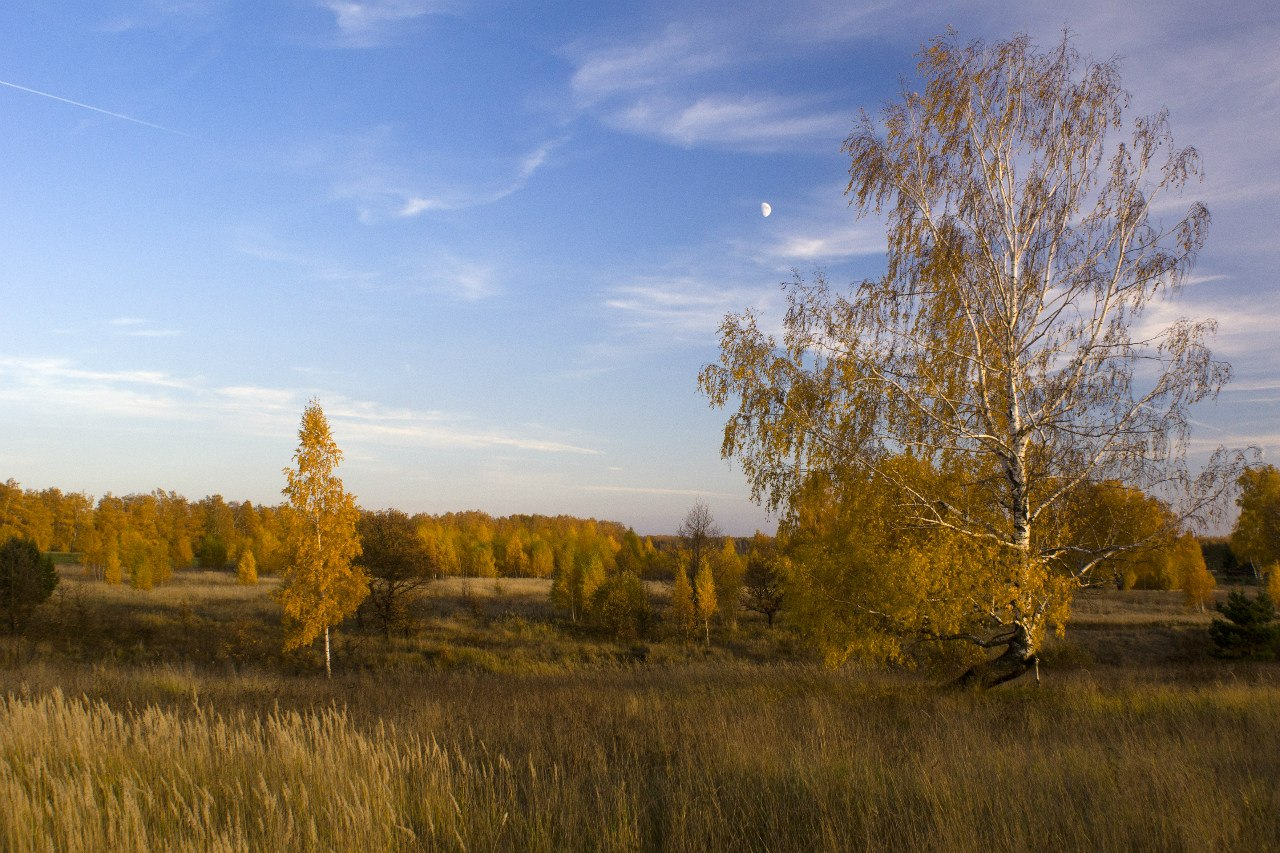 """фото """"Желтая осень"""" метки: пейзаж, Берёза, Луна, Россия, небо, осень"""