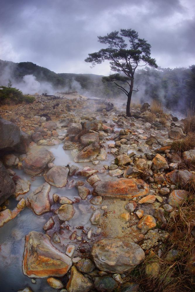 """фото """"в Японском лесу"""" метки: природа,"""