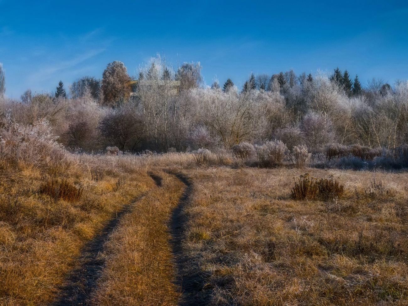 """фото """"Дорога к домику на холме..."""" метки: пейзаж, луг, осень, утро"""