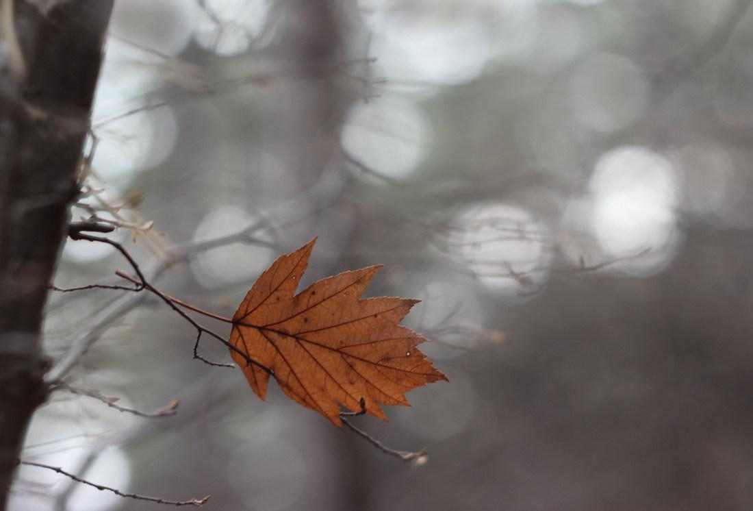 """фото """"Банальный сюжет"""" метки: природа,"""