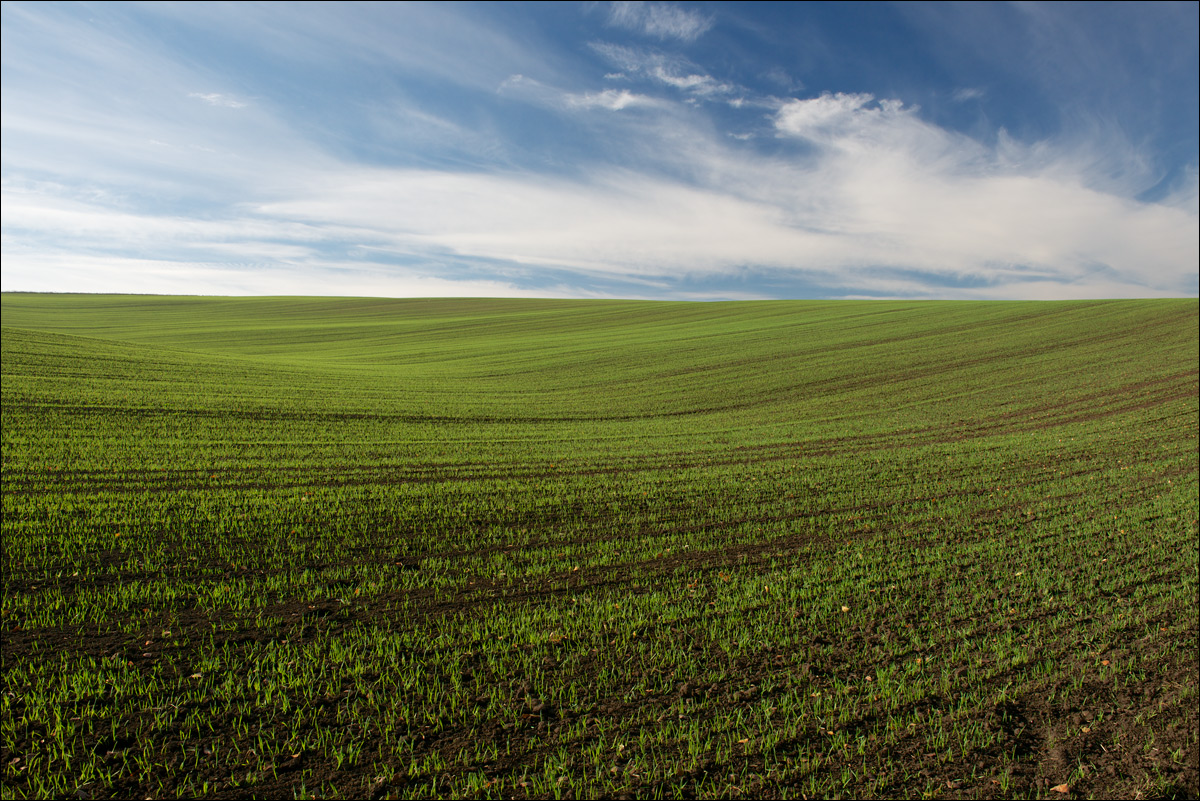 """фото """"Озимые"""" метки: пейзаж, путешествия, озимые, равнина, степь, чернозем"""